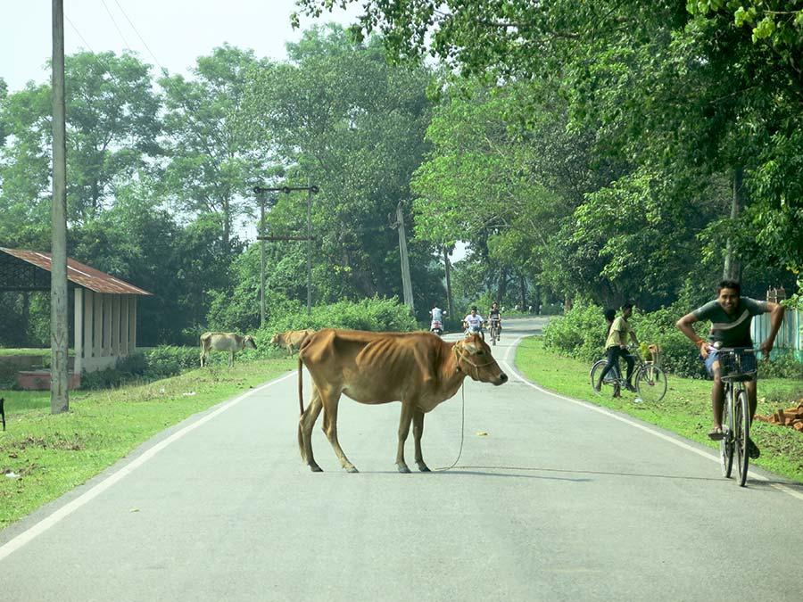 Cette fois encore, les vaches étaient évidemment de la partie. Mais, campagne oblige, on avait également droit à plus de vélos et d'imprudents piétons, entre autres chèvres, chiens et même chatons... Figurez-vous que cette photo a été prise sans zoom, à 60 km/h. J'ai fermé les yeux juste après l'avoir prise... Comme souvent quand j'étais dans une voiture en Inde ;)