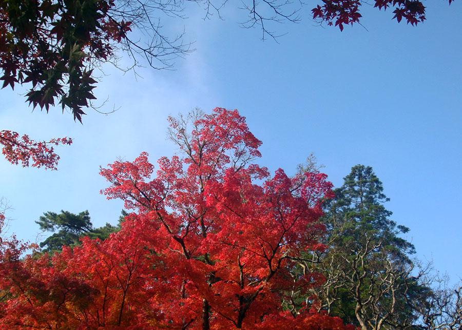 L'automne que j'ai passé au Japon en 2016 m'a complètement rendue dingue des feuillages roux... Et il paraît que la Chine ne devrait pas me décevoir sur ce point !