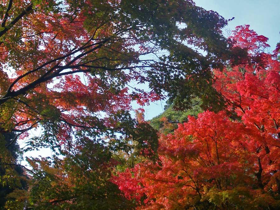 Pour voyager en Asie, je ne jure que par l'automne... Moins chaud, moins touristique, moins cher et, surtout, je ne me lasse pas des feuillages !