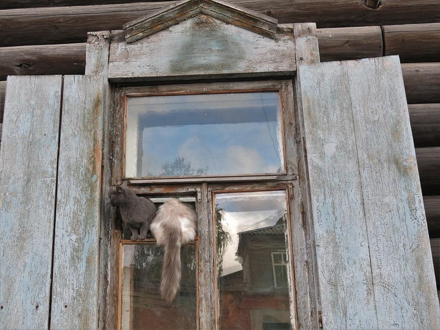 Dans les petites rues de Tomsk, on s'est fait plein d'amis : chats, chiens et petits moineaux pas du tout farouches ! Apparemment, les Russes sont aussi gagas des chats que les Français ;)