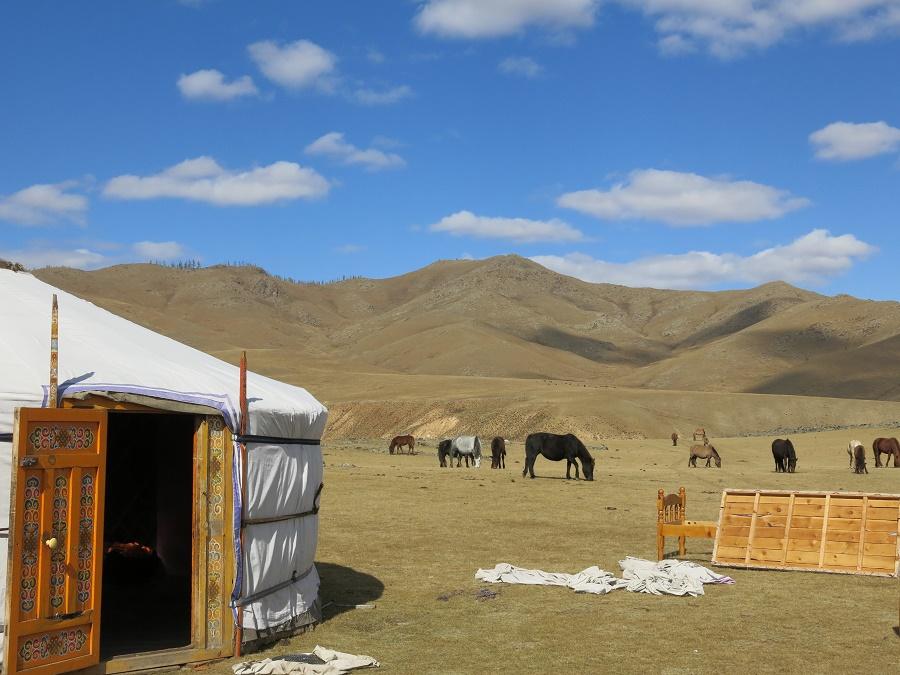 Ces chevaux étaient d'autant plus indépendants et fougueux qu'ils avaient l'habitude de gambader à leur guise dans la steppe...