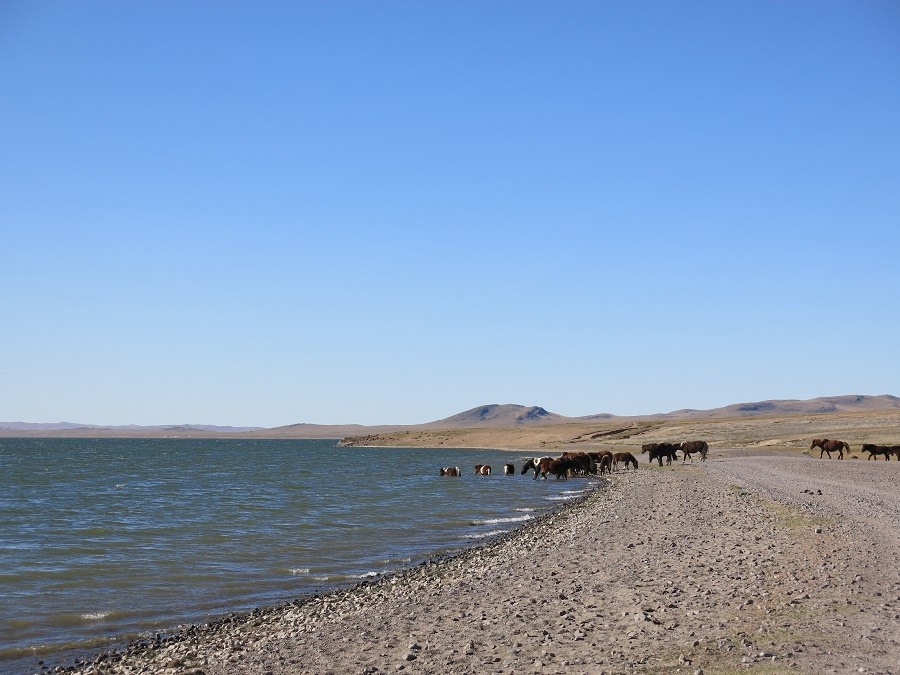 Nous n'en croyions pas nos yeux en voyant une si grande étendue d'eaux bleues. La steppe est si aride qu'on en vient à oublier qu'il existe de telles étendues d'eau... Les troupeaux de chevaux ne se gênaient pas pour aller y boire tout leur soûl.