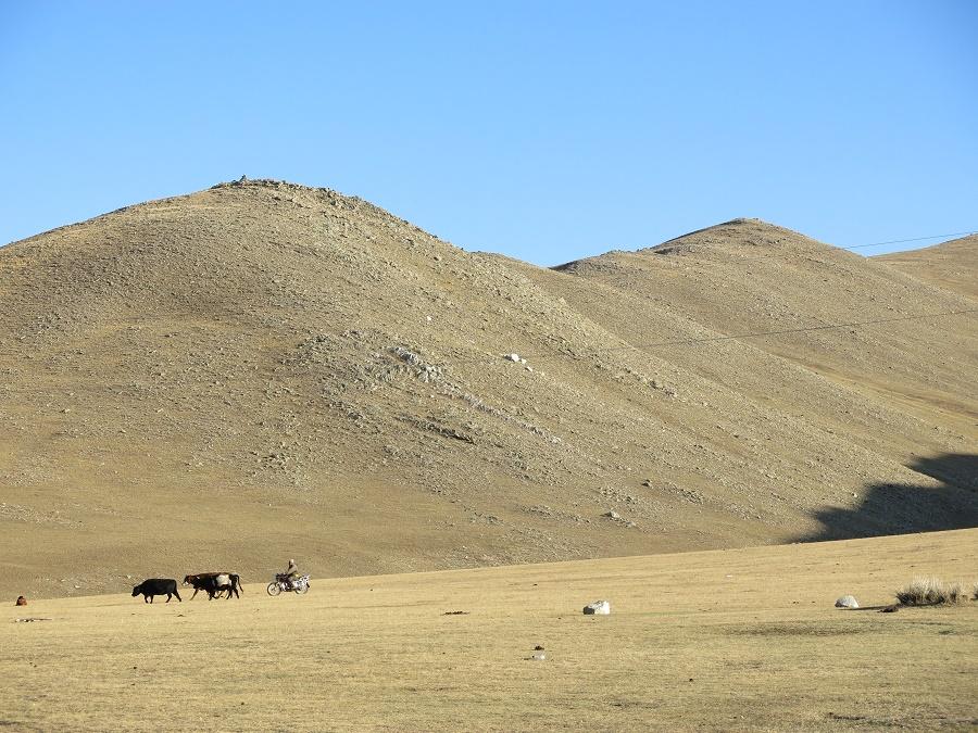 Le tour que j'ai réservé nous emmenait, une semaine durant, explorer la région à l'ouest d'Oulan Bator, en plein cœur de la Mongolie. C'est un paysage majoritairement couvert de grandes étendues de steppes, où les familles de nomades laissent leurs troupeaux paître librement. Quand il faut les ramener vers le campement, les éleveurs les rameutent à dos de cheval ou de moto...
