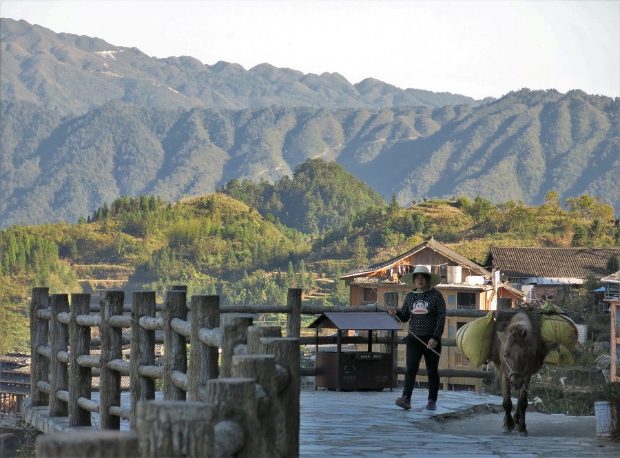 A part les poulets, les oies et les canards, je croisais de nombreux chiens très gentils, qui gambadaient entre les rizières avec un air de propriétaire qui fait le tour de ses terres. J'ai également rencontré deux fois une paysanne avec un petit cheval chargé de sacs de riz.