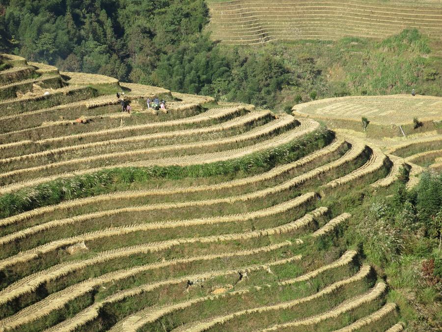 Les rizières en terrasses de Longji, où j'ai séjourné juste après la récolte du riz. Certes, les rizières asséchées devaient être bien moins belles que quelques semaines auparavant, mais j'ai savouré avec délices le calme olympien de l'arrière-saison...