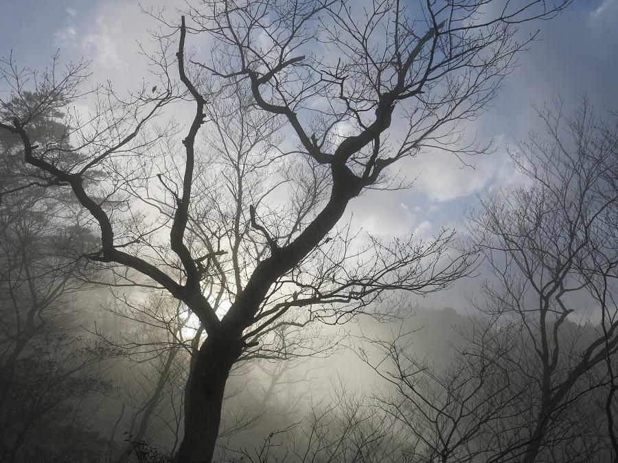 Le soleil a même pointé son nez à travers la brume, habillant ce paysage de début d'hiver d'une lumière presque mystique... :)