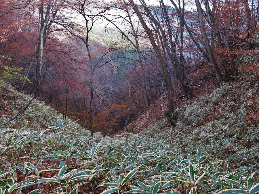 Comme la cascade de Kirifuri est moins en altitude que celles que j'avais admirées la veille, j'ai eu le plaisir d'observer quelques feuillages d'automne attardés dans la forêt.