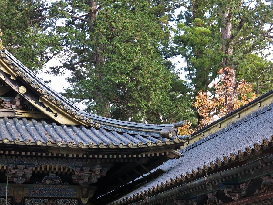 Les temples de Nikko sont entourés de magnifiques cèdres multi-centenaires, dont les branchages captent la lumière d'une façon qui me rappelle irrésistiblement les estampes de Kawase Hasui.