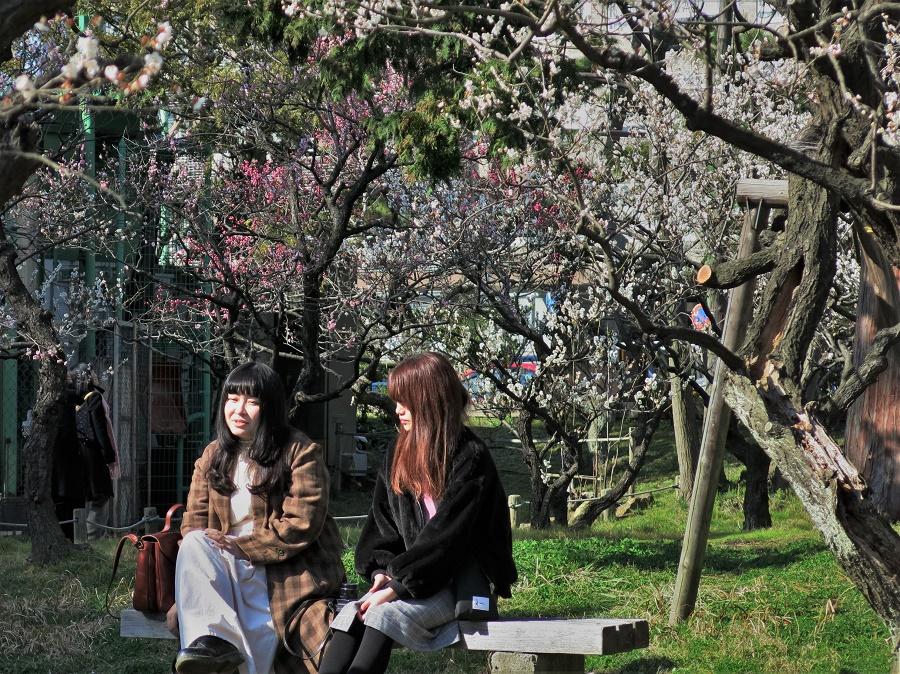 Le hanami, ou observation des arbres en fleurs, constitue une tradition incontournable du printemps japonais. Dès les premiers jours d'avril, voire de mars si la saison est précoce, c'est la ruée vers les parcs pour admirer les sakura !