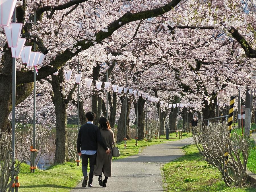 Il y avait tellement peu de monde que les Japonais, d'habitude si prudes, se permettaient des petites libertés... Il faut dire que c'était très romantique, cette ambiance printanière ;)