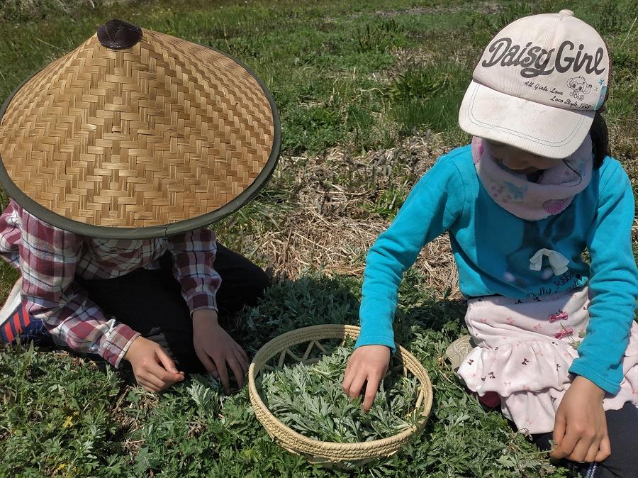 Hier j'ai fait une grosse cueillette de yomogi, ou armoise japonaise, avec les deux plus jeunes enfants de la famille japonaise qui m'accueille. Heureusement que tout le monde avait son chapeau, parce que ça tapait fort sous le soleil !