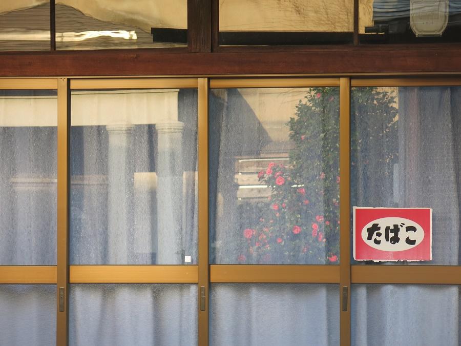 Le quartier ancien de Takada où nous avons séjourné avait un délicieux petit air vintage. Dans les fenêtres aux rideaux de dentelle d'épiceries tout droit sorties des années 70 se reflétaient les buissons de camélias en fleurs... (une des plantes favorites des mémés japonaises !)
