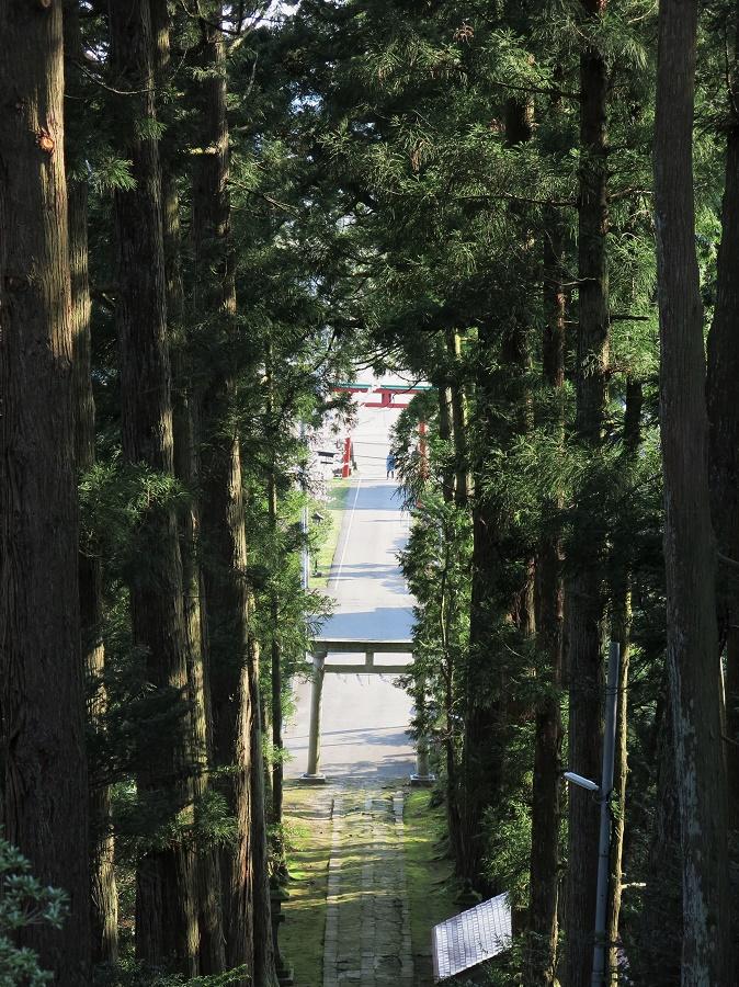 """Peu après le temple Rinsenji, en retraversant le village de Kasugayama, on trouve un autre petit sanctuaire à flanc de montagne. Il n'est pas bien grand, et c'est pourtant lui qui a donné son nom au village : le sanctuaire de Kasuga, ou """"jour de printemps"""". Il a la grand particularité d'avoir été récemment entièrement reconstruit, tout en bois de cèdre et selon les techniques traditionnelles. Il sent bon les essences du bois ! Mais le plus impressionnant, c'est l'étroit escalier qui y monte à travers des arbres tout simplement immenses. Une verticalité vraiment pleine de majesté et d'élégance...."""