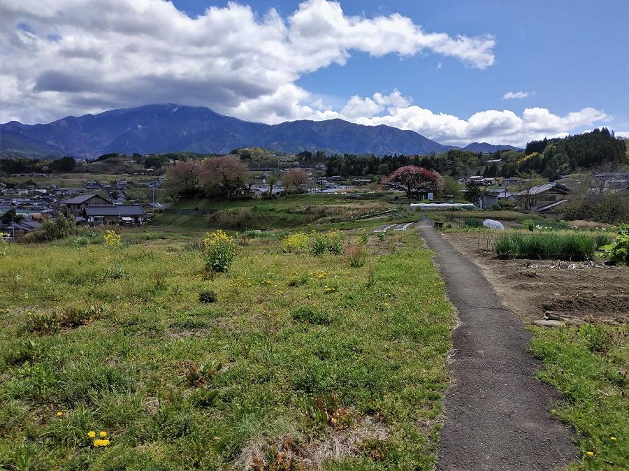 Les sansai, ou plantes sauvages comestibles, sont partout au Japon... surtout au printemps ! Quand je me balade avec mes hôtes de wwoofing, j'ai l'impression que je pourrais dévorer tout le paysage. A les entendre, il n'y a plus qu'à brouter l'herbe des champs ;)