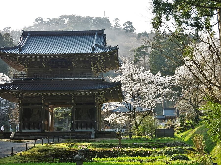 GROS coup de cœur  pour ce temple incroyablement paisible et son jardin enchanteur ! Apparemment, dans quelques temps les bassins seront à leur tour couverts de lotus et d'iris violets... Là encore, ça donne envie de revenir....