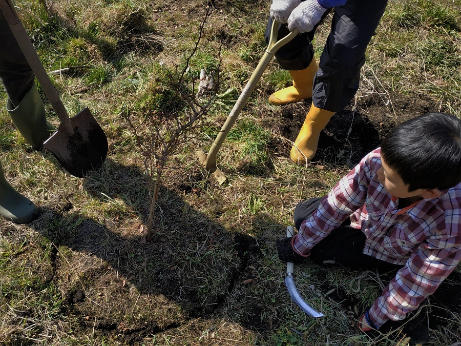 En ce moment-même, je fais du wwoofing chez une famille très sympa dans les Alpes japonaises. Avec les parents, les trois enfants et deux autres wwoofers, nous vivons à huit dans une maison de plus de 150 ans toute en bois. Sur cette photo, le petit Kanta nous aide à déterrer un plan de myrtilles bios pour le replanter dans un nouveau jardin...