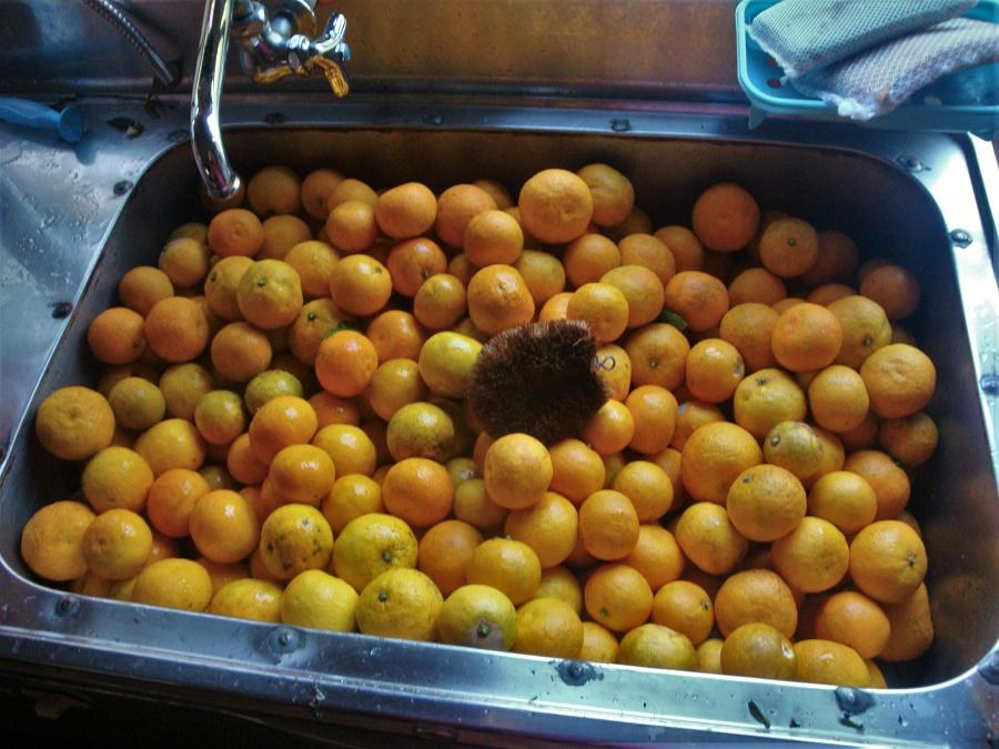 Sur l'île de Shikoku, j'ai préparé des kilos de marmelade de sudachi, un agrume hyper-local qui ne pousse que dans une seule préfecture du Japon. Un fruit à l'arôme unique, aux accents un peu iodés, que je ne suis pas près de retrouver...