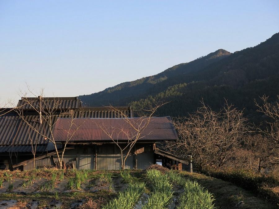 La ferme où je vis en ce moment a plus de 150 ans. Elle est nichée au creux d'une vallée des Alpes japonaises, au pied d'une abrupte forêt de cèdres si réputés qu'ils servent à le reconstruction des temples les plus prestigieux du Japon. Aux alentours, ce n'est que rizières, jardins, forêts, rivières et sources chaudes.