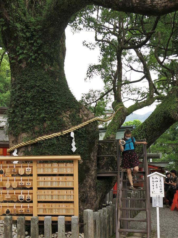 À l'intérieur du tronc se trouve une échelle, que l'on escalade pour ressortir deux mètres plus haut, de l'autre côté de l'arbre. Plus qu'à aller accrocher la tablette votive avec les autres !