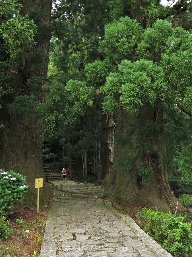 """L'entrée du sentier du Daimonzaka est gardée par un """"couple"""" de cèdres âgés de 600 ans, appelés """"mari et femme"""" par les gens du coin. Malgré mes pauvres efforts de photographe, je n'ai pu saisir que la moitié de leur immense hauteur ! C'est vous dire la taille des deux amants..."""