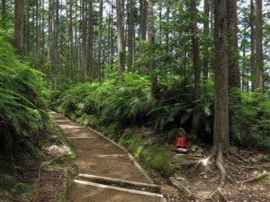 Sur les sentiers du Kumano Kodô : Hongû et ses onsen