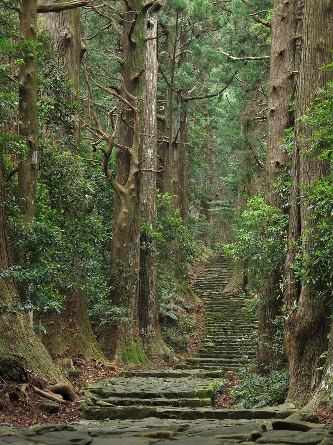 Dans l'ombre des cèdres séculaires, la belle randonnée du Daimonzaka est baignée d'une lumière verte toute mystérieuse. De plus, le fait de grimper de nombreuses marches donne, une fois encore, l'impression de monter vers le sacré. Et bien sûr, de mériter la vue ;)