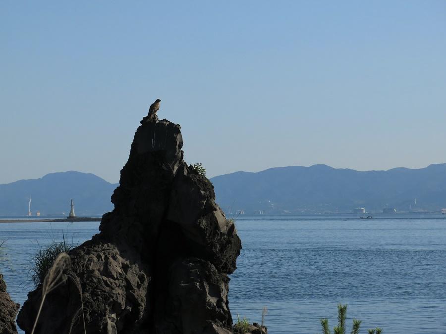Le long du sentier de Nagisa, nous pouvions admirer la vue sur la ville de Kagoshima, de l'autre côté de la baie. Il y avait aussi de nombreux oiseaux, dont les fameux rapaces qu'on voit si souvent au Japon.