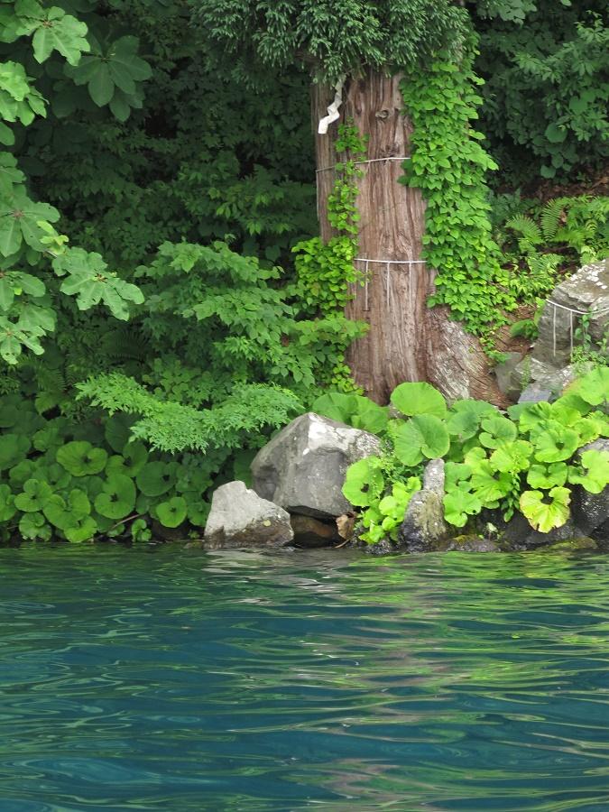 Pendant la visite, notre guide s'est arrêté à de nombreuses reprises pour nous montrer un coin particulier des rives du lac, et en particulier des lieux inaccessibles par la terre. Il y avait un grand rocher en forme d'ours, des falaises ocres peuplées d'hirondelles, des pins penchés juste à la surface du lac... Et, enfin, un arbre sacré dont je pouvais voir les immenses racines s'enfoncer dans les eaux transparentes. C'est là que la coutume veut qu'on jette son vœu à l'eau. Si on l'a bien roulé et qu'il coule à pic, cela veut dire que le vœu sera exaucé par l'esprit du lac...