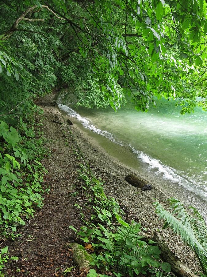 Parfois, je laissais mon vélo au bord de la route pour suivre au hasard de petits sentiers de randonnée, qui la plupart du temps collaient à la rive du lac. Je m'amusais à admirer les couleurs changeantes de l'eau, selon la météo (capricieuse en cette saison des pluies !) ou le fond du lac. En effet, celui-ci alternait brutalement entre roches volcaniques noires, galets d'un blanc aveuglant, sable noir et gravier beige. Tout autour de moi, j'observais la flore exubérante de l'été japonais, dont l'esthétique mêlait étrangement des airs de jungle tropicale, de forêt bretonne et de prairie alpine.