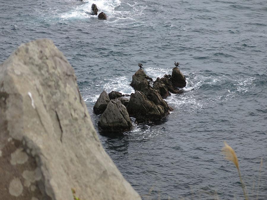 Et enfin, au bout de cette paisible promenade (et non sans m'être arrêtée en route pour festoyer au restaurant Kaiseki Kira) : le cap Tachimachi ! Et là, je vous jure, je me croyais au Morbihan xD Des falaises de pierre noire éraflée, le vent qui agite les graminées à leur sommet et l'océan gris qui fait mousser les rochers. Et puis il y avait ces deux grands oiseaux qui, pareils à des personnages d'Alice au Pays des Merveilles, faisaient inlassablement sécher leurs ailes que les vagues, tout aussi inlassablement, revenaient sans cesse asperger.