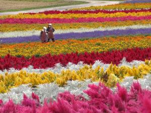 Balade à Furano, entre les fleurs et les volcans d'Hokkaido